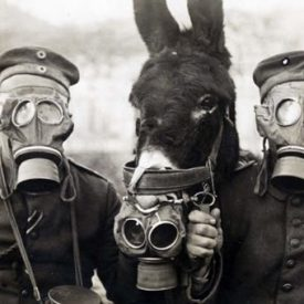 Two WWI German soldiers with donkey - all three wearing gas masks