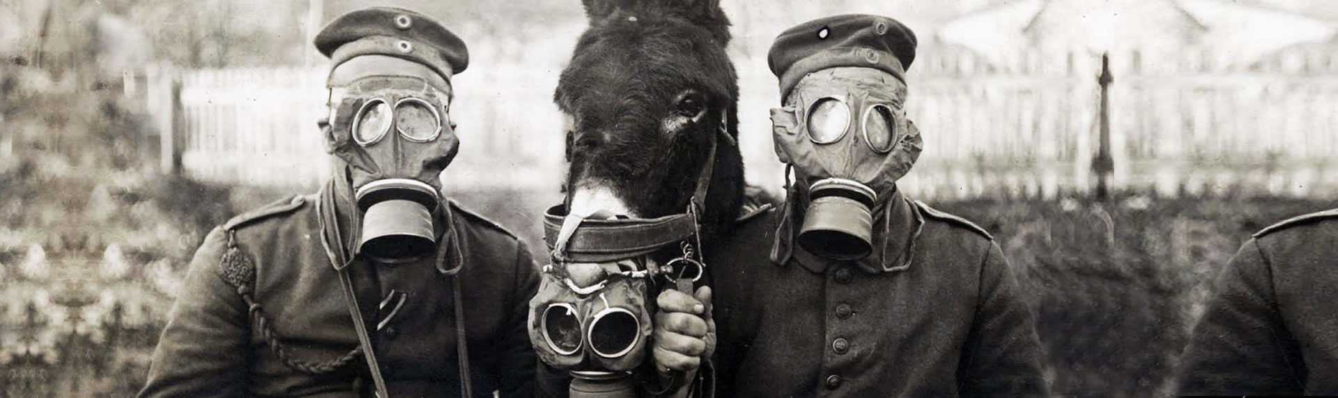two WW1 soldiers and a donkey all wearing gas masks